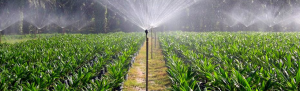 Greenhouse, Smart farm automation and monitoring sensors, dashboard software